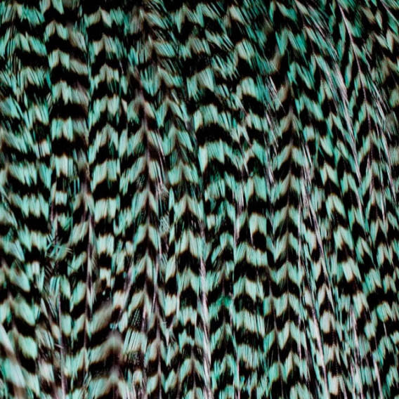 Pack 3 Plumas M Verde Turquesa
