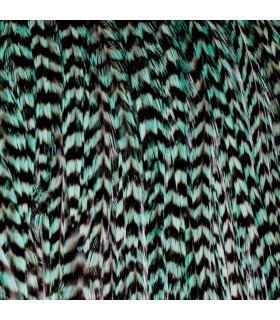 Pack 1 Pluma XXL Verde Turquesa