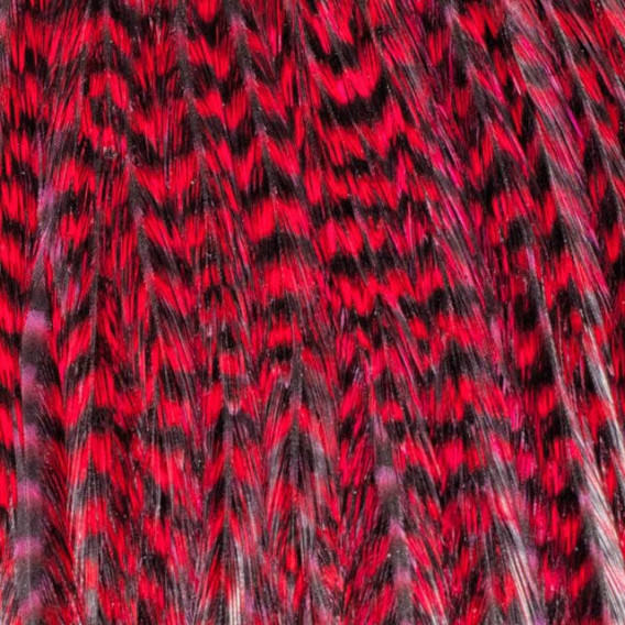 Pack 1 Pluma XXL Rojo