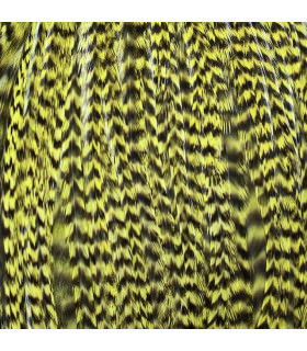 Pack 3 Plumas XL Amarillo