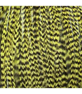 Pack 3 Plumas L Amarillo